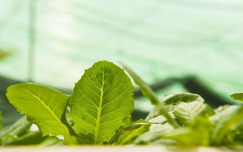 Closeup photo of a plant
