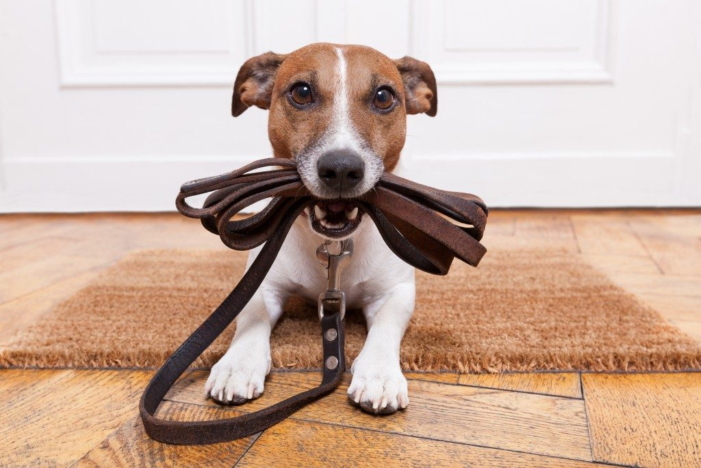 Puppy holding leash