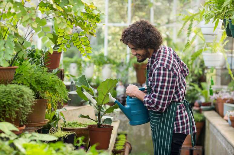 Man watering plants in the greenhouse