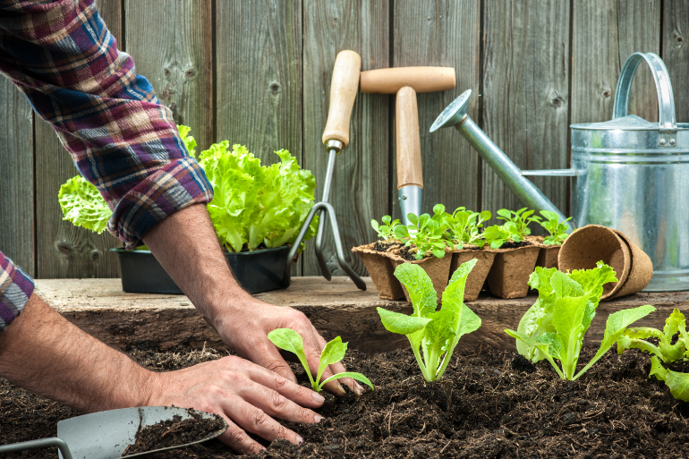 Man planting a vegetable