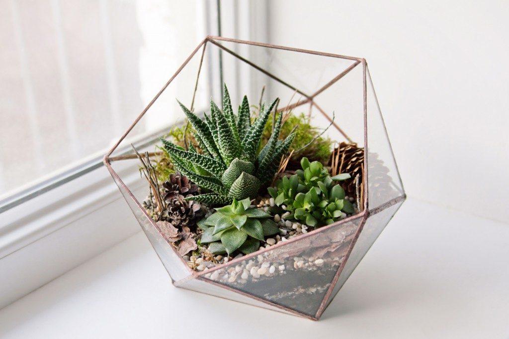 succulents inside terrarium