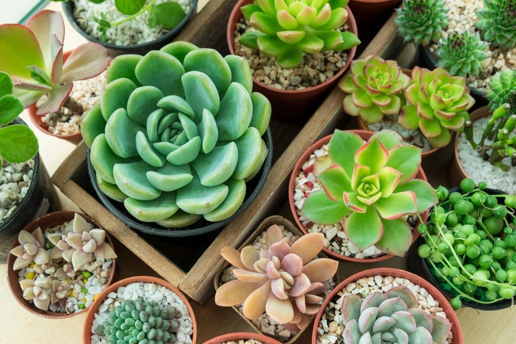 top view different types of succulents