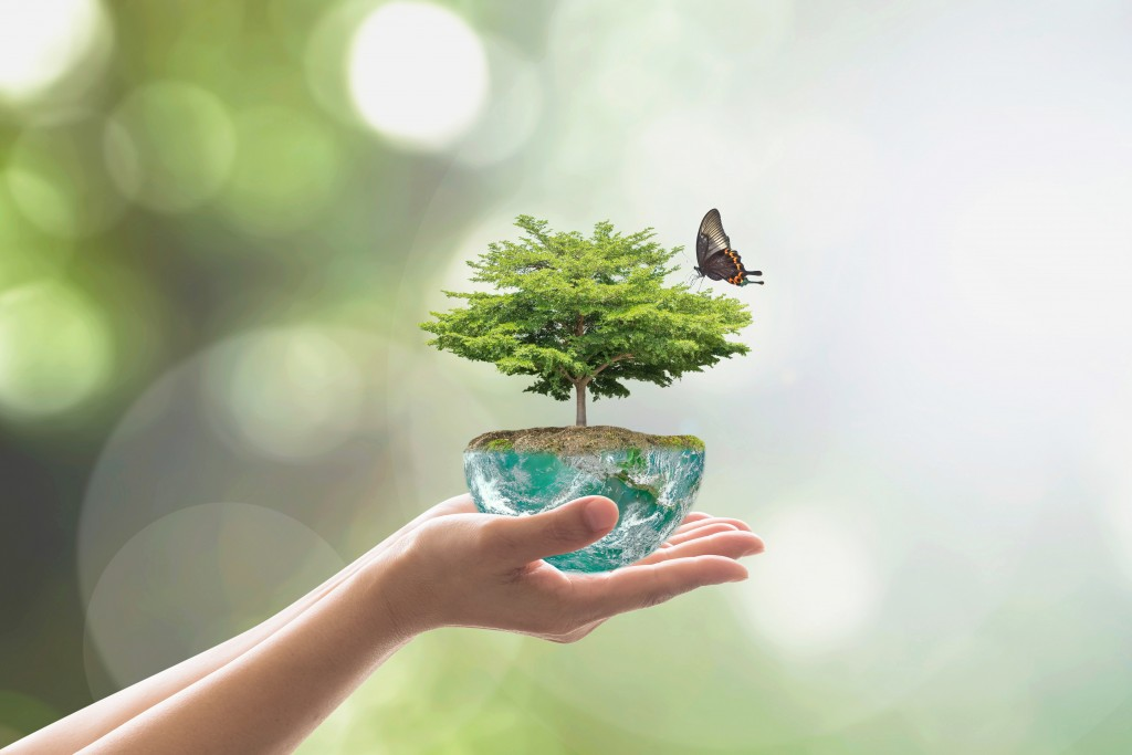 person holding a small tree