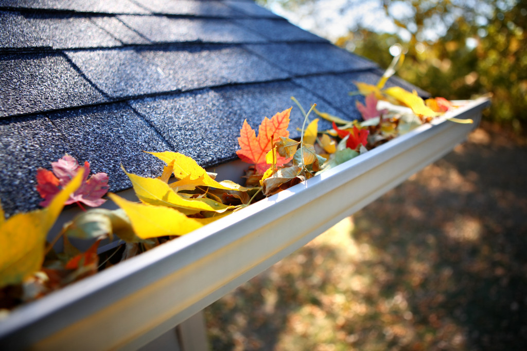 roof gutter filled with autumn leaves