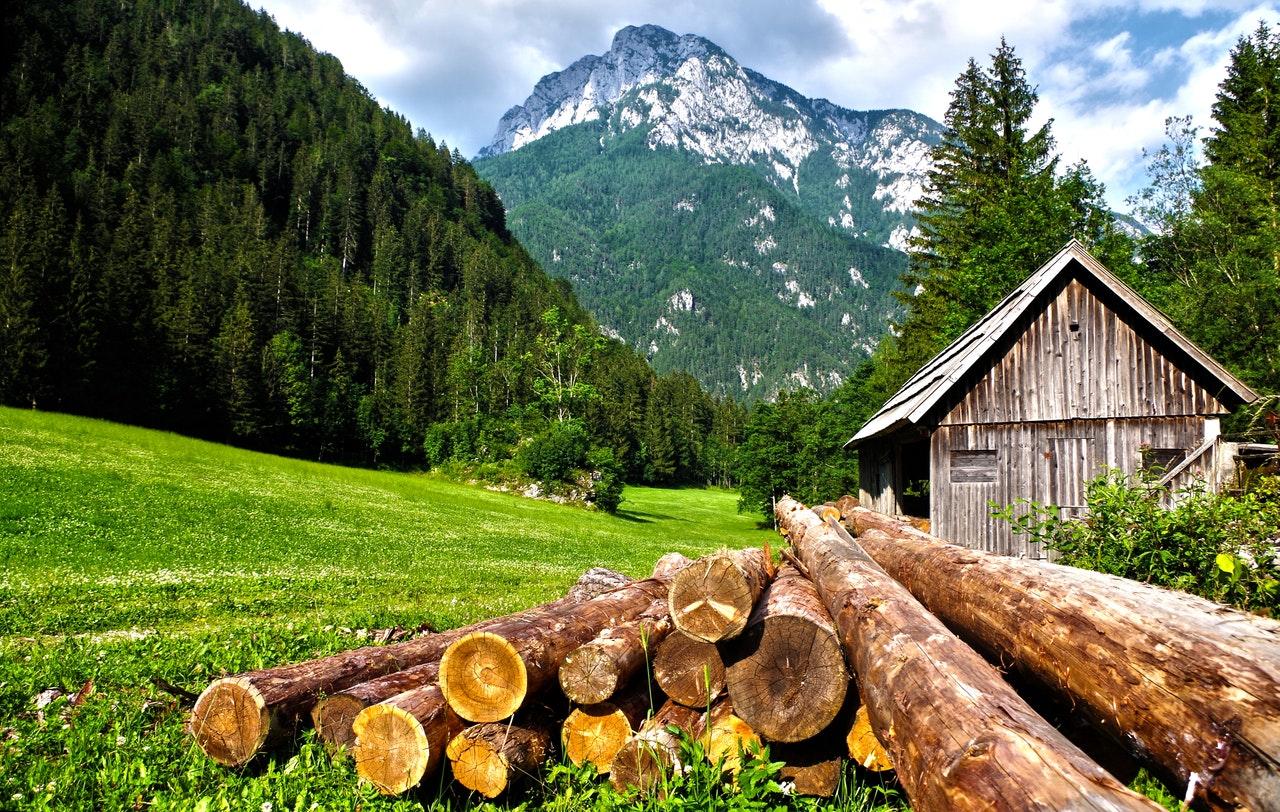 logs near a cabin