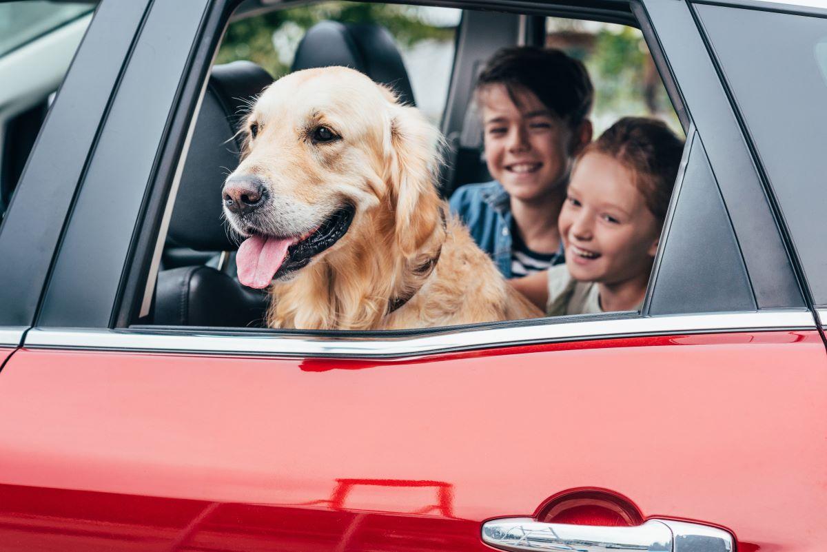 travel family car road trip dog